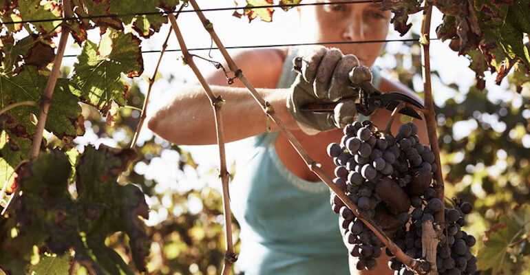 what is natural wine and is it worth trying
