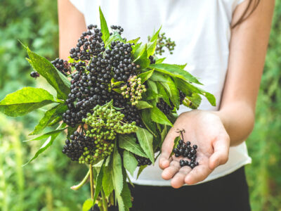 3 dietitian approved ways elderberry can support your overall health
